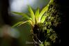 Bromeliads - Poas Volcano - Costa Rica (3) D