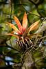 Bromeliads - Poas Volcano - Costa Rica (2) D copy