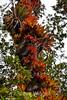 Bromeliads - Poas Volcano - Costa Rica (16) D
