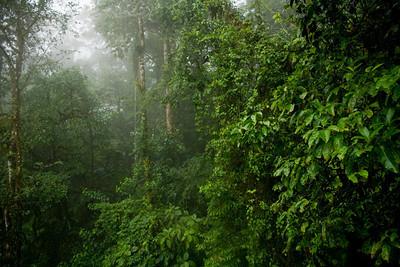 Rain Forest_Sky Shots