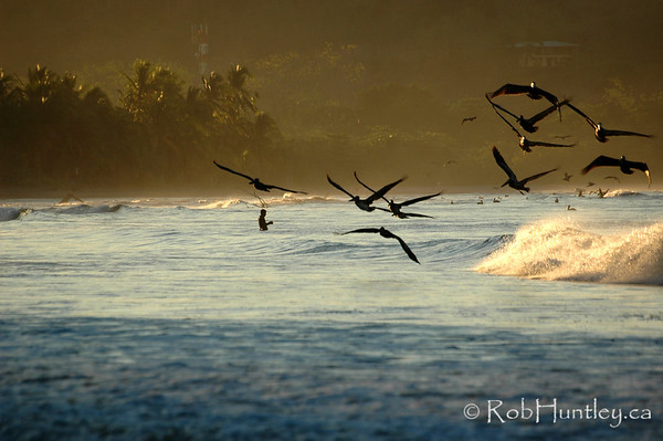 Fisherman and pelicans at sunrise in Samara, Costa Rica.