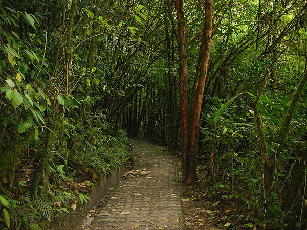 Pathway in Monteverde Cloud Forest