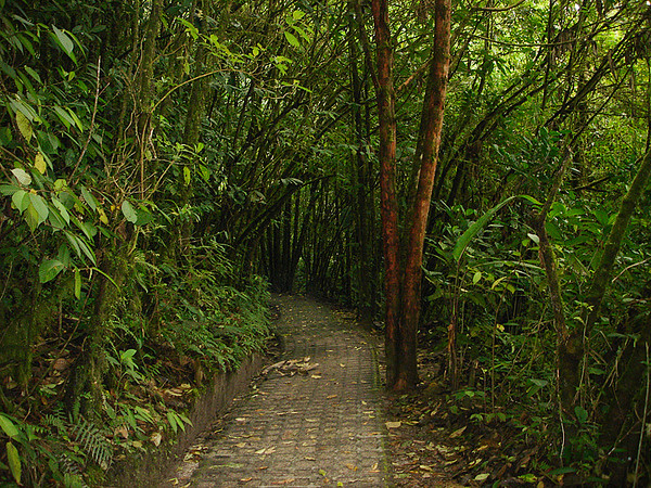 Pathway in Monteverde Cloud Forest