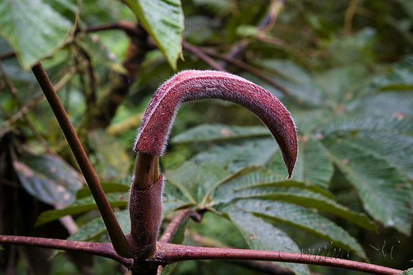 Flora; Monteverde Cloud Forest
