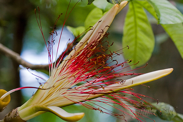 Flora in Tortuguero National Park