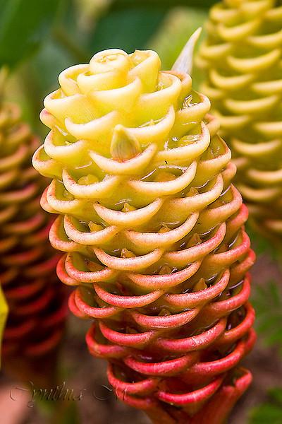 Flora at Totuga Lodge