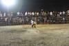 bull in pursuit