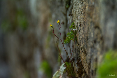 Tiny Flower on Wall