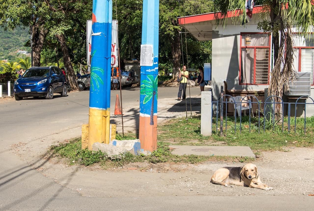 Stray dog in Playas Del Coco, Costa Rica - December 2014