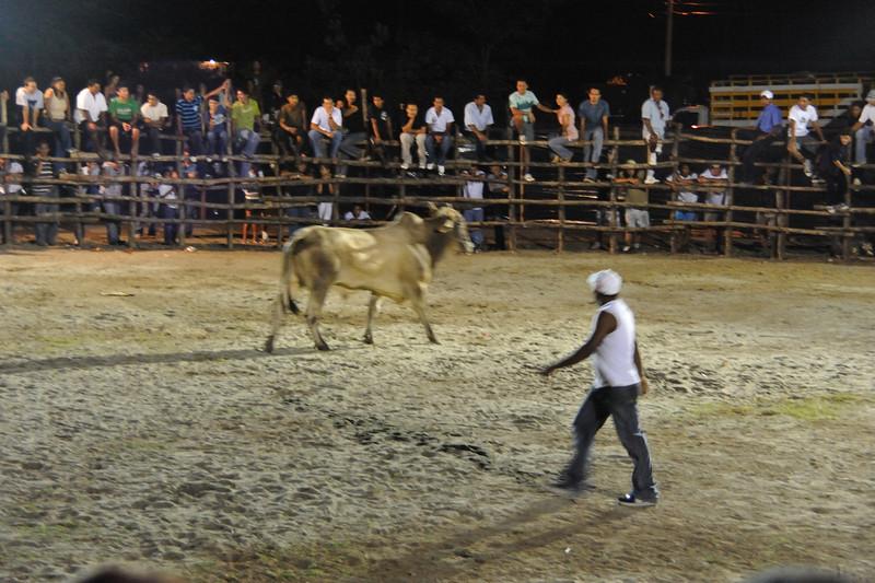 bullfight tease