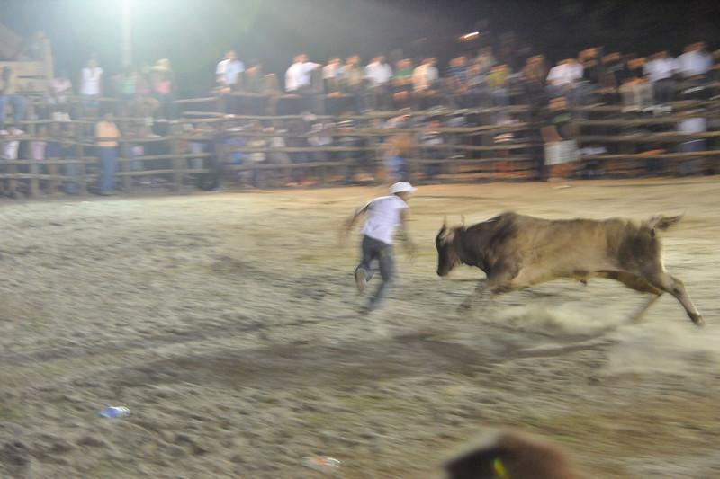 bullfight getting close