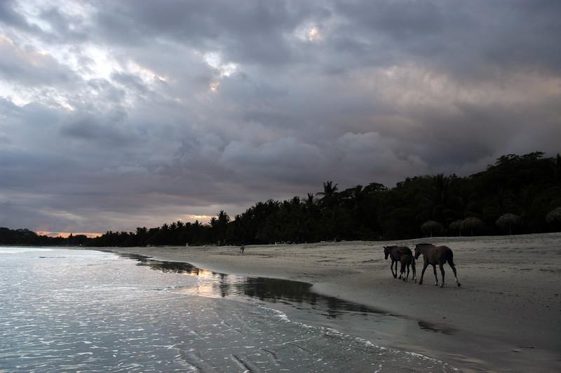 Horse stroll, Playa Sámara