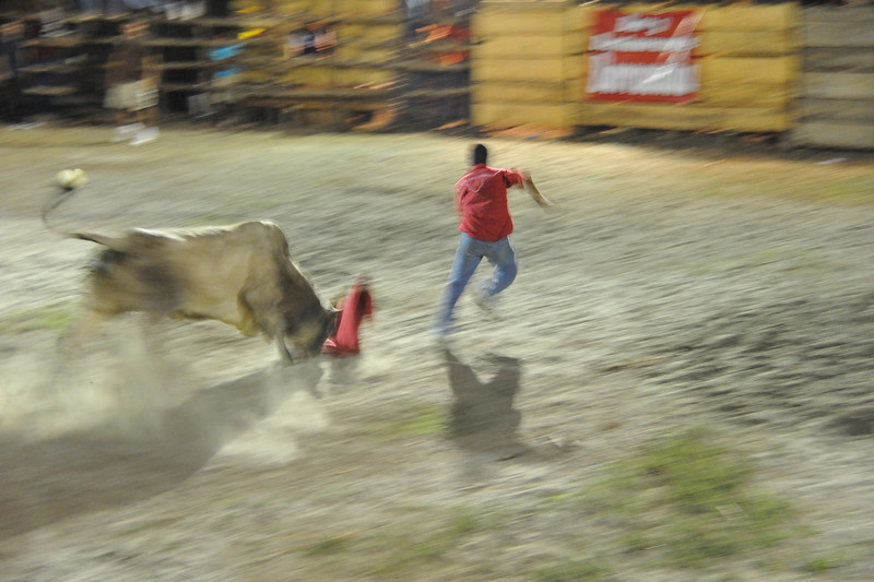bull gets torero's red cloth