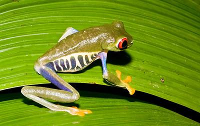 2008 Costa Rica 1252