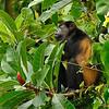 Travel Shots of Costa Rica-203