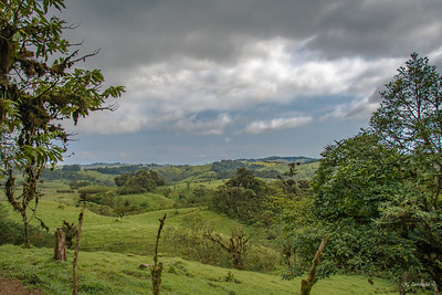 Fields Beyond the Cloud Forest