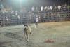 the bullfight tease