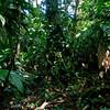 Estación Biológica La Selva