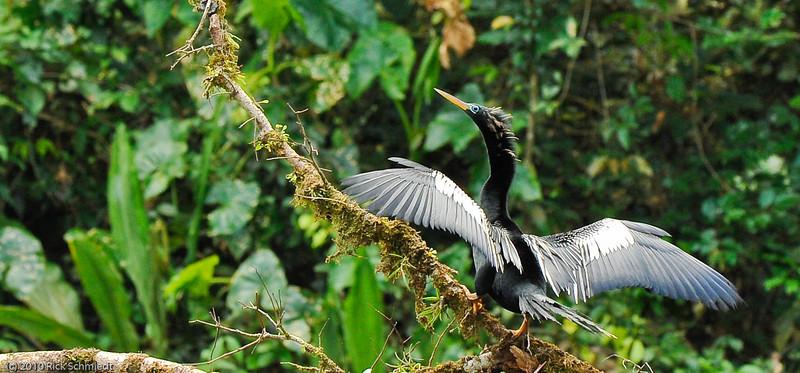 Travel Shots of Costa Rica-207