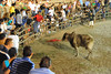even the torero gets cornered