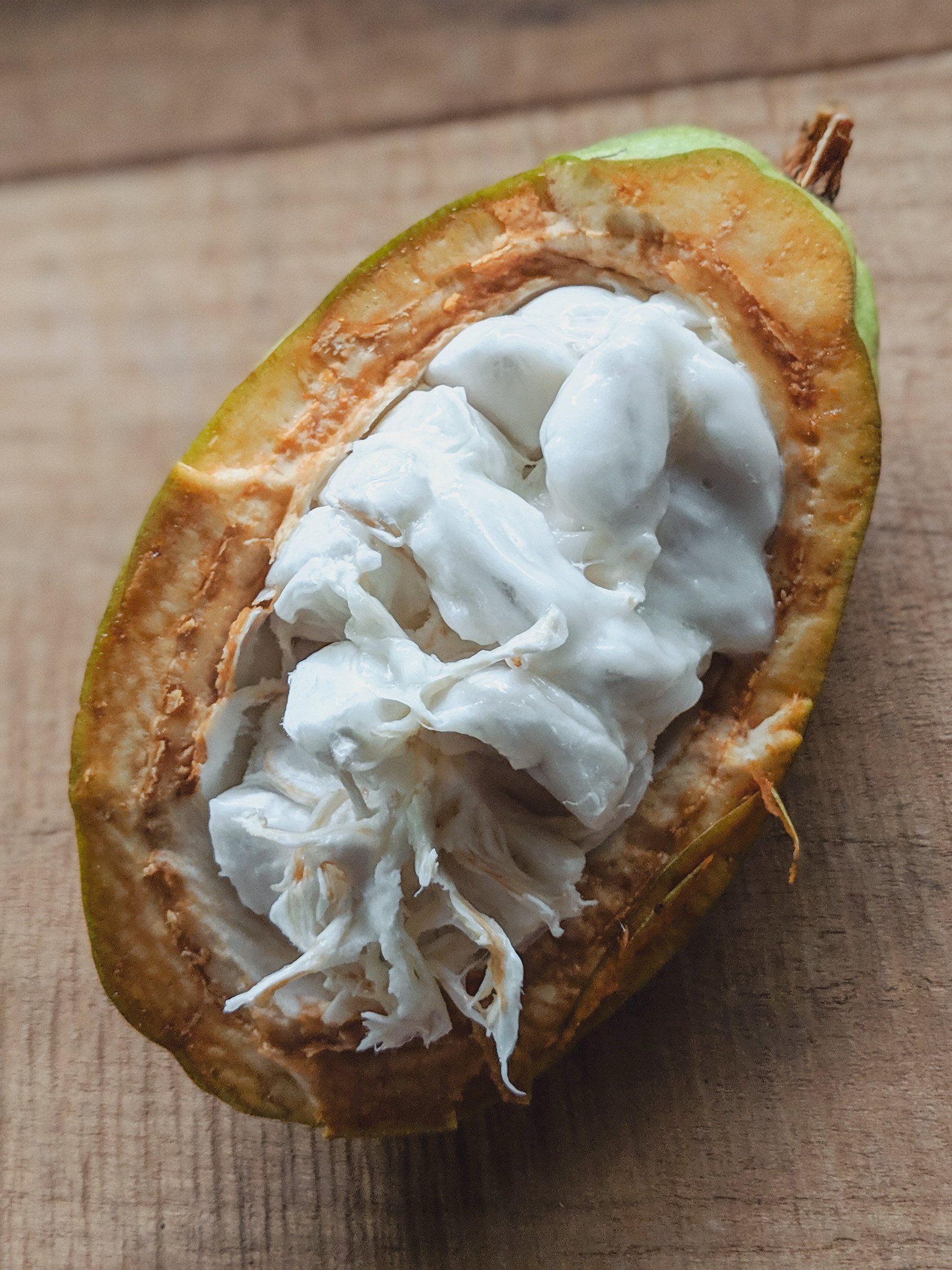 Cacao fruit in Costa Rica is a sweet edible plant with a fleshy white interior.