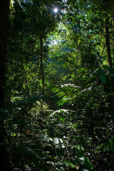 Carara National Parc