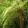 Travel Shots of Costa Rica-215