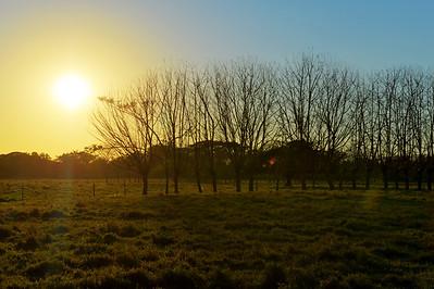 Sunset trees, Nicoya Peninsula