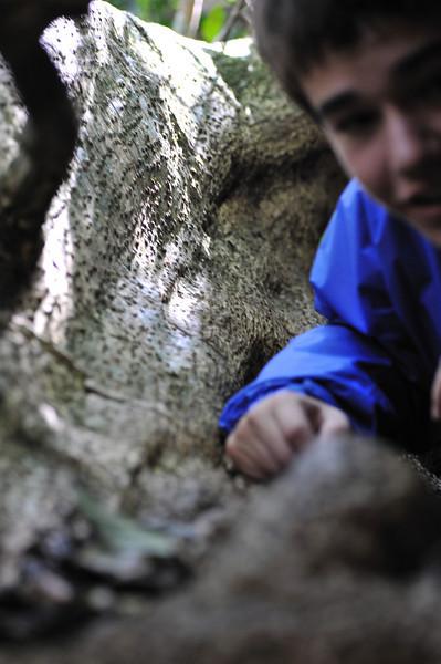 Sylvaine in tree