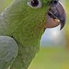 La Lora (Parrot), La Fortuna