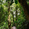 Hiking path through the Monteverde Cloud Forest
