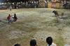 the bullfight encouragement