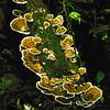 Fungi and moss Log