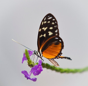 2008 Costa Rica 0960