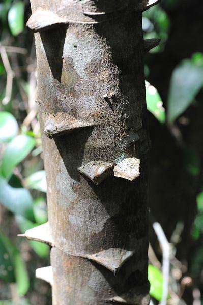 pointed tree bark