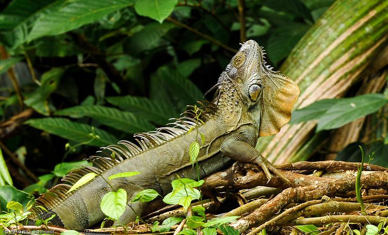 Travel Shots of Costa Rica-233