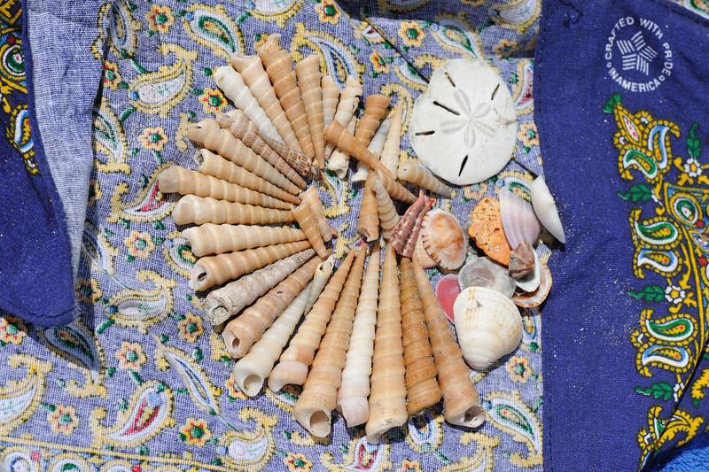 Sylvin's seashell display