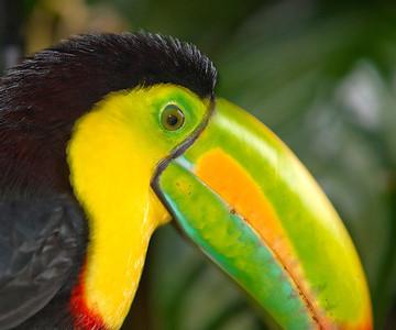 2008 Costa Rica 1046