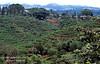 Farmlands, Coffee Growing, Costa Rica, Central America
