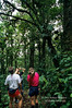 Model Released, Three People Examining Rain Forest Vegetation, Lake Coter Eco Lodge, Private Biological Reserve, Northern Pacific Mountains, Arenal Lake Region, Costa Rica, Central America