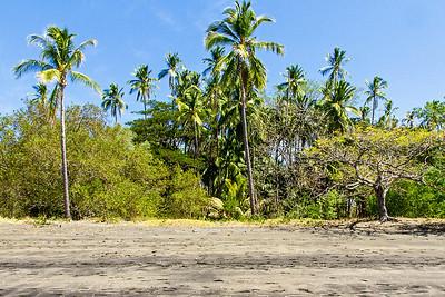 Trees along the shore of Papagayo Bay