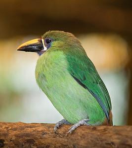 2008 Costa Rica 0953