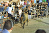 teasing bullfight crowds