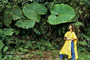 Model Released, Woman Looking at an Elephant Ears Plant, Colocasia esculentum, Rain Forest Vegetation, Lake Coter Eco Lodge, Private Biological Reserve, Northern Pacific Mountains, Arenal Lake Region, Costa Rica, Central America