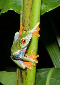 2008 Costa Rica 1240