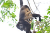 howler monkey and kid