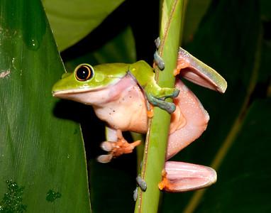 2008 Costa Rica 1268