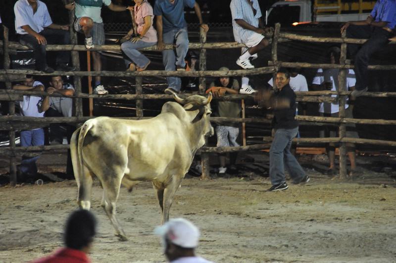 the bull making his choice