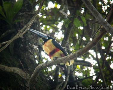 Costa Rica  (5 of 53)
