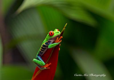Mascot of Costa Rica.